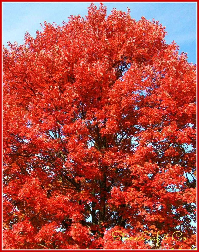 cropped.redtree.
