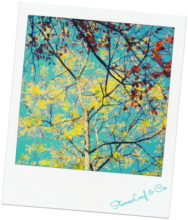 picmonkey.polaroid.fall