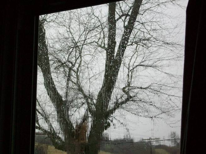 It's pretty much a gray rainy day here in Kentucky, much like this one I took a year or so ago outside my workroom window.