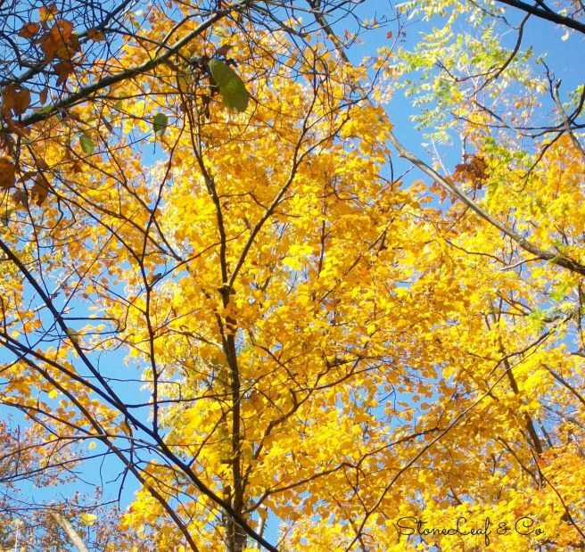 yellow.tree